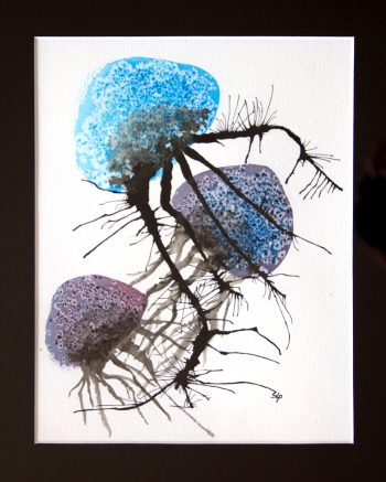 meduse-book