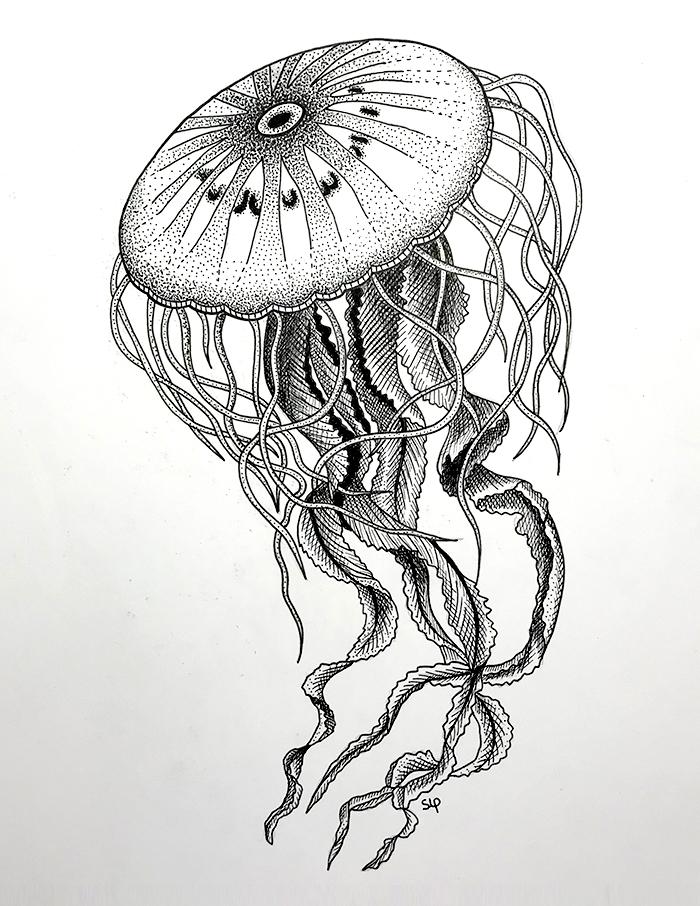 meduse2